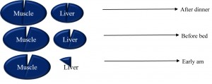 Figure 1: Changes in muscle and liver glycogen overnight