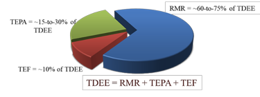 Chart that shows TDEE formula