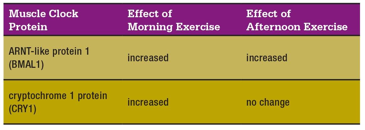 muscle-clock-chart