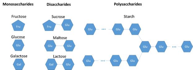 monosaccharides, disaccharides, and polysaccharides